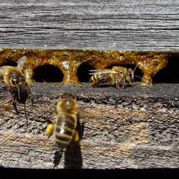Beehive Entrance